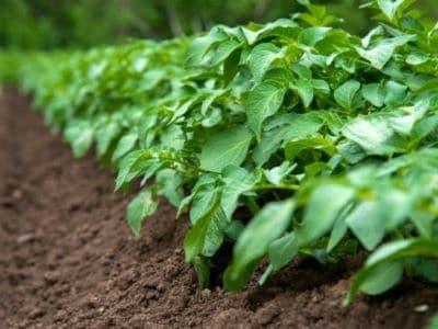 Site Management Restrictions after biosolids application washington